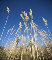 Le gouvernement réduit de près d'un quart l'enveloppe destinée à l'assurance récolte