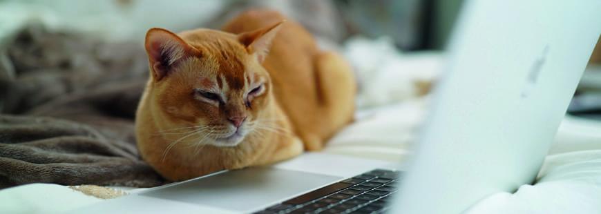 chat-ordinateur-teletravail