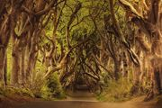 dark-hedges-games-of-thrones