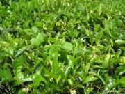 L'assurance agricole se développe au Vietnam