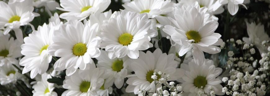 fleurs-obseques-deces