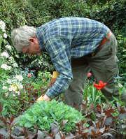 jardin-jardinier-homme