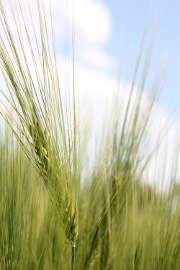 Focus sur l'assurance multirisque agricole