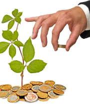 plante-argent-pieces
