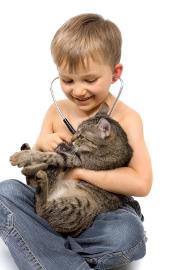 Quelles assurances professionnelles pour la médecine vétérinaire ?