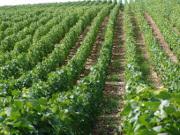 Assurance multirisque professionnelle : découvrez l'offre EASYACE Wine